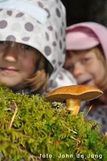 Upptäck Svartådalens rika djurliv och naturupplevelser i Västmanland
